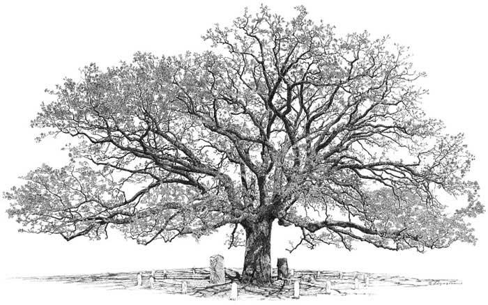 Big tree studio wab page test northchurchoak